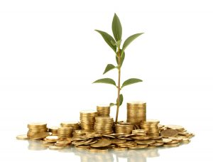 coin growing money tree